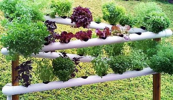 PVC Vegetable Shelf