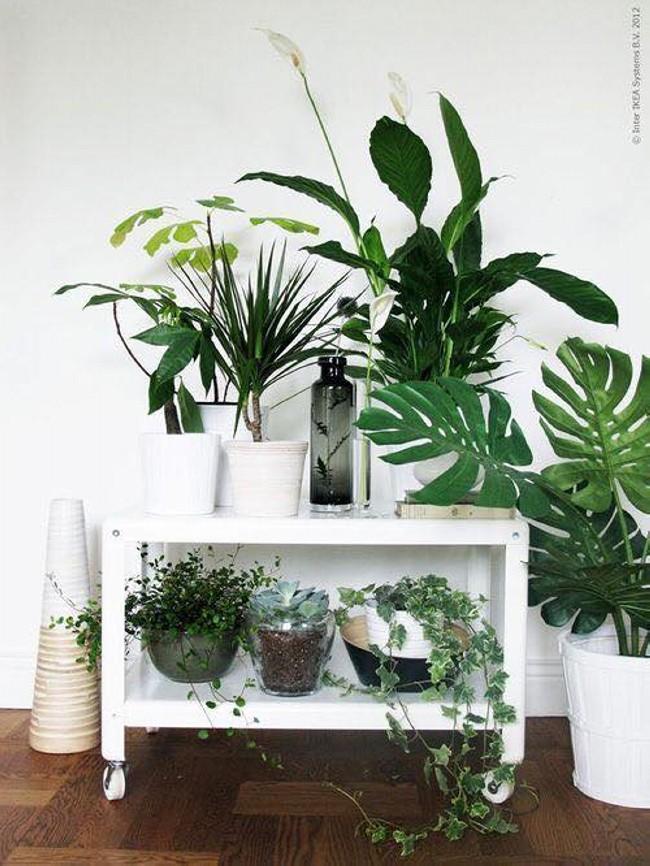 Little Planting Ideas