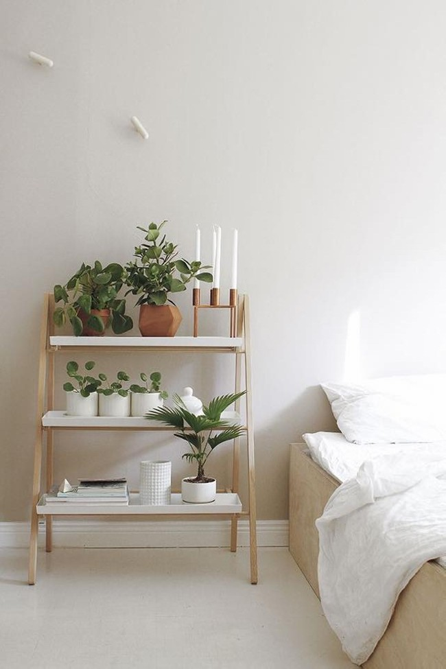 Room Planting Ideas
