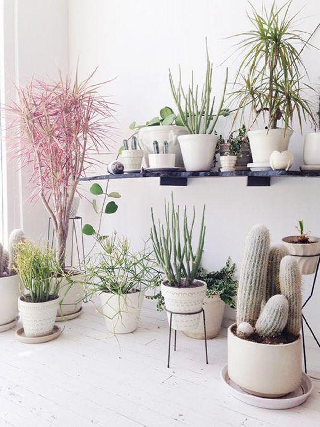 cute Planting Ideas
