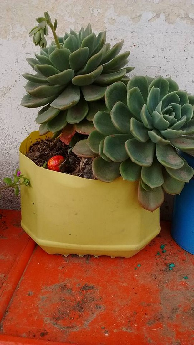 Easy Pots Ideas