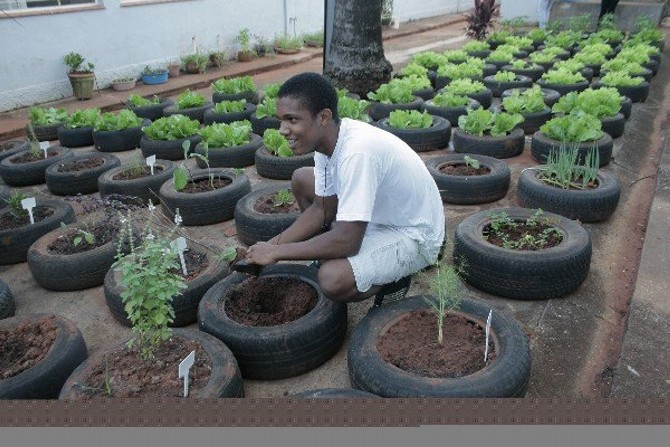 Used Tires Upcycled Planter Boxes