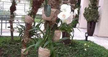 Burlap Garden Idea