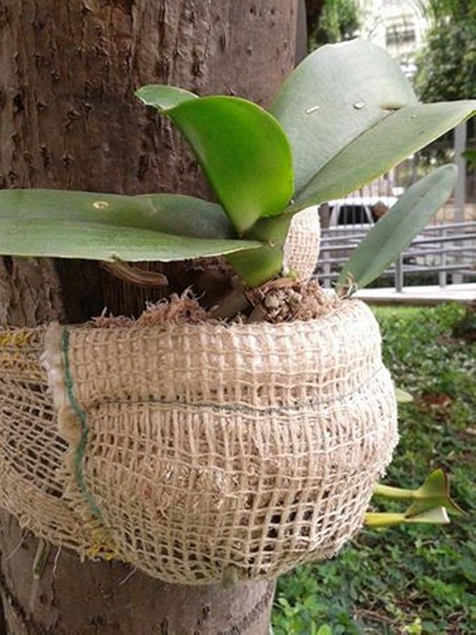Burlap Tree Planters