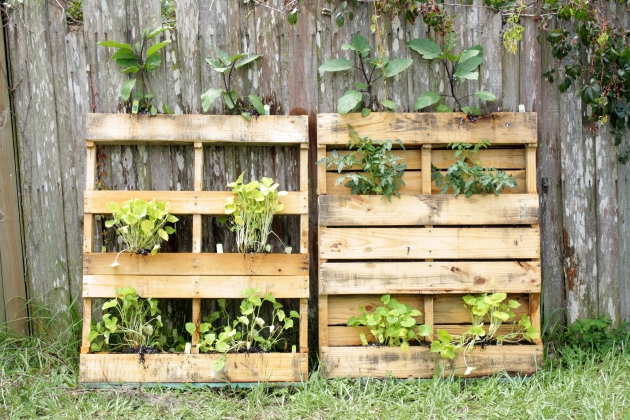 Ideas For The Pallet Garden