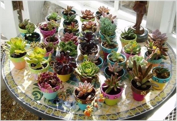 Small Pots for Decor