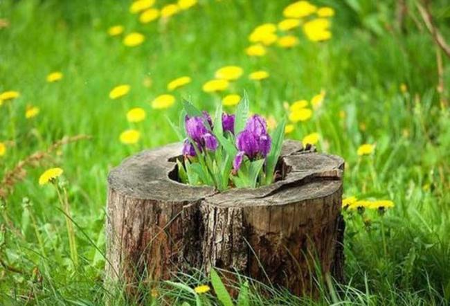 Log Planter Ideas