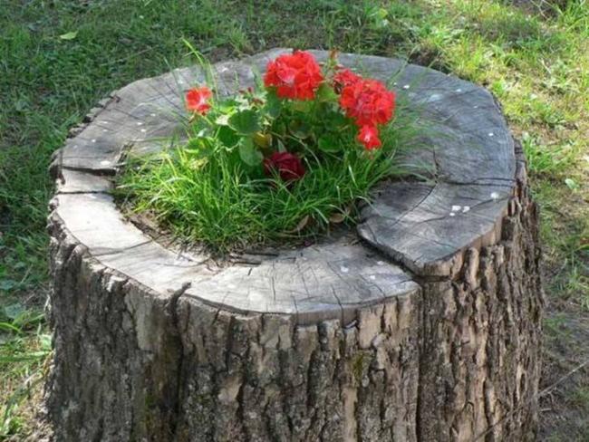 Log Planting Plan