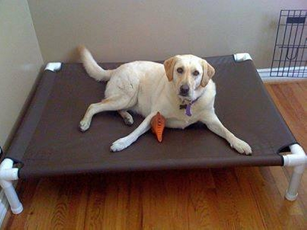 Recycled PVC Pipe Dog Bed