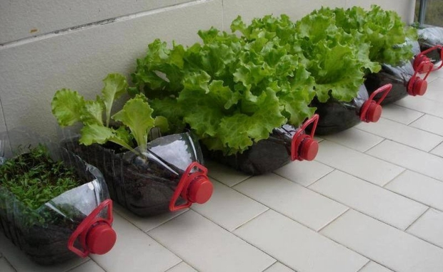 Recycled Pet Bottles Planters