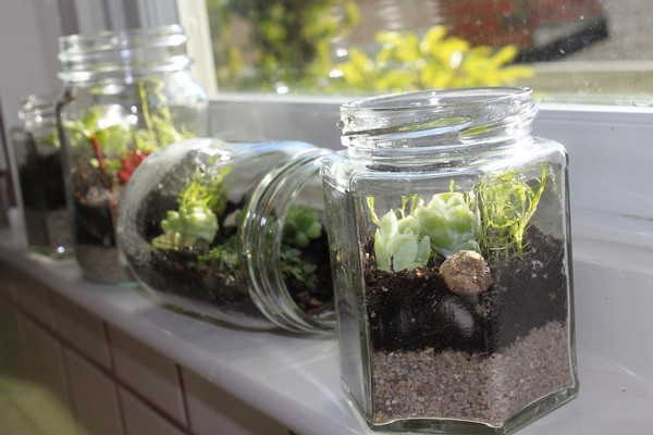 Glass bottle terrariums