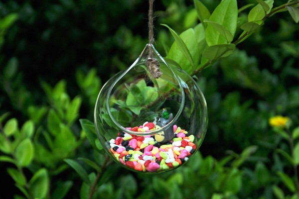 Goldfish Bottle Wall Terrarium