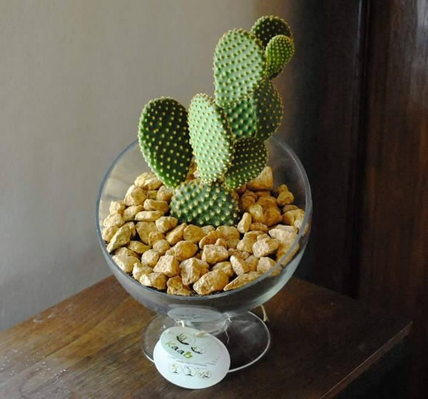 creative terrarium idea