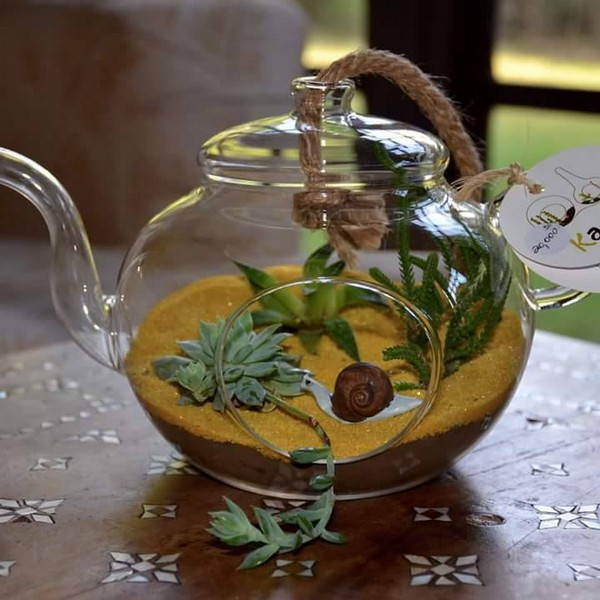 cute terrarium plan