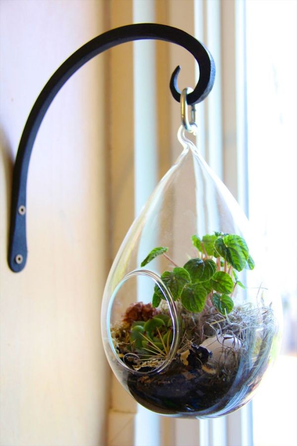 hanging terrarium decor idea