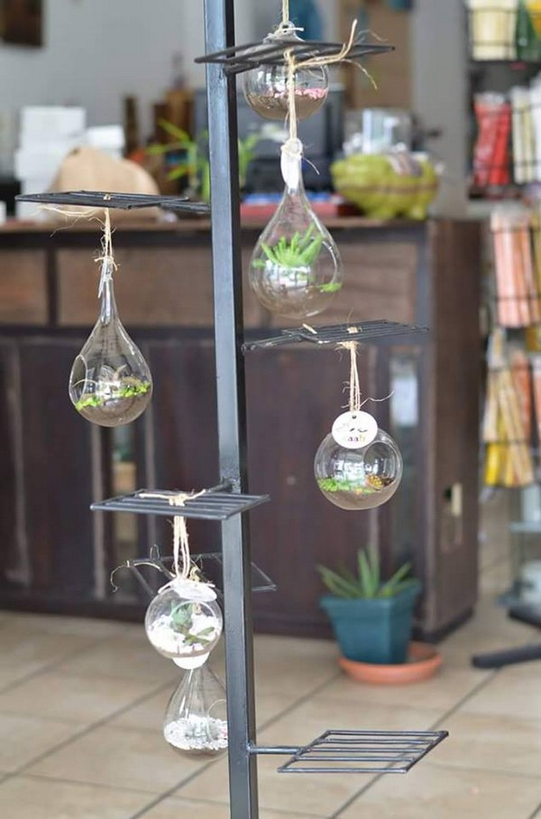 hanging terrarium idea