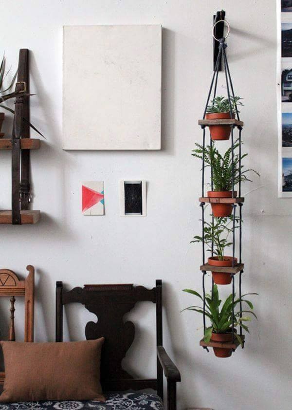 creative hanging plants
