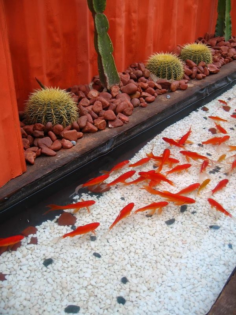 fishing plan in garden