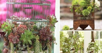 Cage Planters Decoration