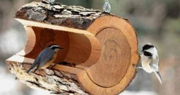wood log for birds