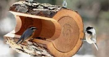 wood log for birds